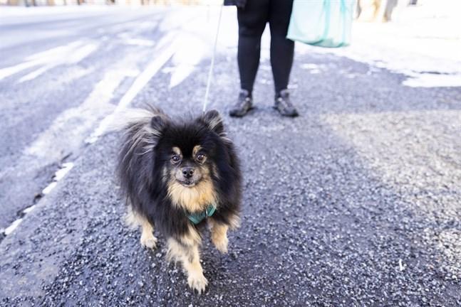 12-åriga Dina är inte skyldig till några bajskorvar på Brändö torg, enligt matte.