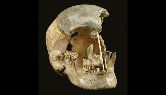 Denna skalle är från en kvinna som dog för minst 45000 år sedan i nuvarande Tjeckien. Nu bidrar hennes kvarlevor med nya ledtrådar om vårt ursprung.