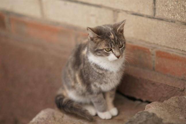 En katt. Inte den som behövde hjälp i Malax.