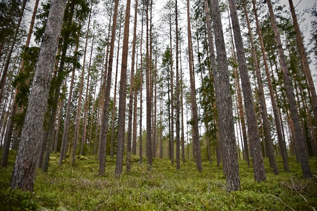 Församlingarna runtom i landet äger tillsammans omkring 170000 hektar skog.