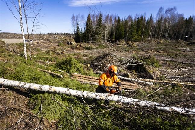 Skogen på Johnsson Mattheys tomt har avverkats sedan i höstas.