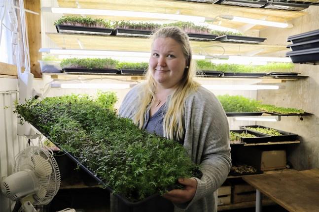 Fanny Åman har odlat mikrogrönt till försäljning sedan slutet av förra året.