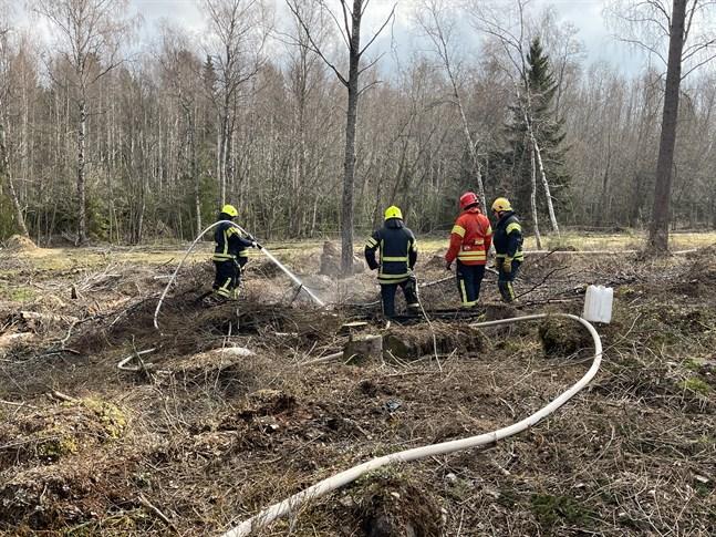 En risbränning i Pedersöre riskerade sprida sig till omkringliggande kalhygge. Brandkåren tillkallades och läget behölls under kontroll.