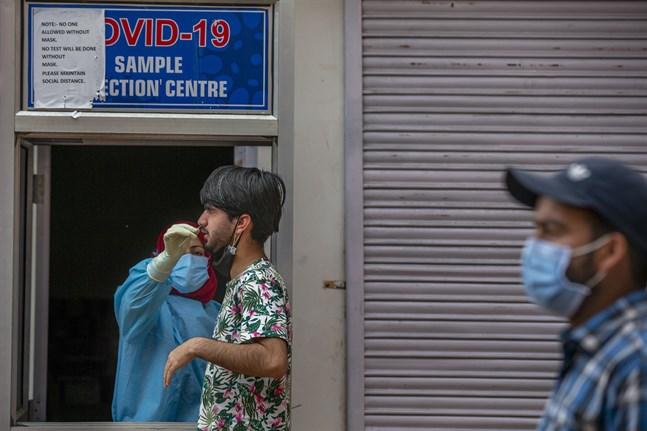 Covidtester utförs i Kashmir i Indien.
