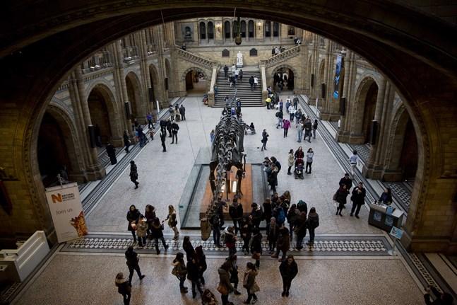 En dinosaurie vid Londons naturhistoriska museum. Arkivbild.