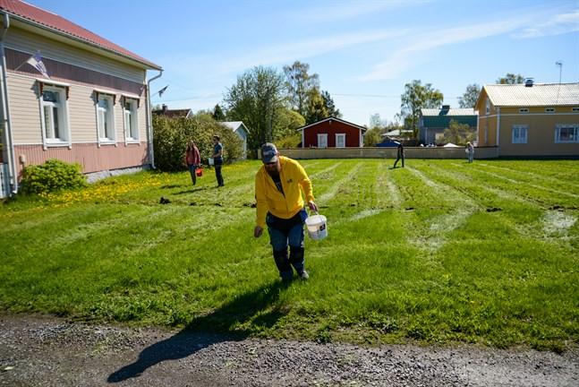 Tekniska nämndens ordförande Jukka Salo, i förgrunden, var på våren med och sådde frön för att skapa en blomsteräng på Fiskartorget i Kaskö.