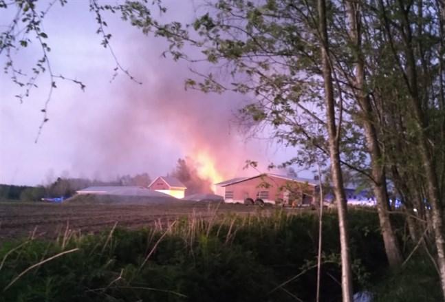 Natten till torsdagen utbröt en brand vid en svinfarm på Bjärkbondtåge i Kronoby.