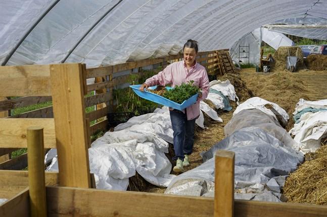 Förutom tomat och paprika planterar Sofie Strandén-Backa bland annat kål, svartrot och lök i växthuset.