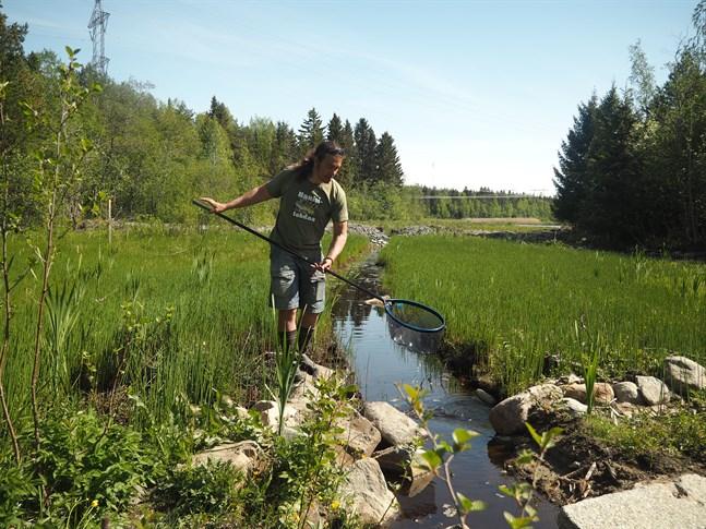 Restauringen har gett ett utmärkt resultat, säger Juha Ojaharju från Finlands fritidsfiskares centralförbund. Han provfiskade på stället i fredags.