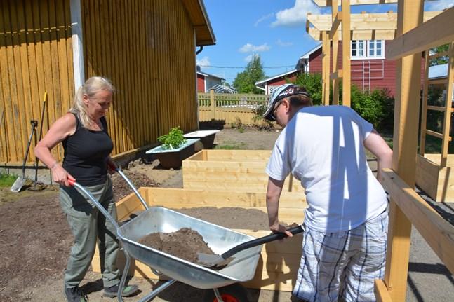Jaana Kaikkonen lutar på skottkärran när Robin Hautaviita fyller på mera jord i odlingslådorna.