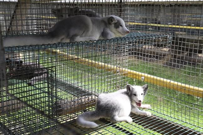 Ett EU-medborgarinitiativ om att förbjuda burar i djuruppfödning behandlas på EU-nivå.