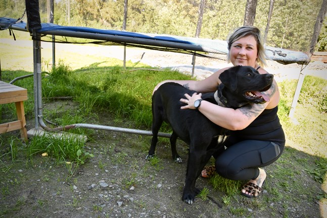 En död råtta hittades under familjens trampolin.I början grävde Jessica Hietaharju ner kadavren i trädgården men hunden Neela grävde upp dem igen. – Nu sätter vi kadavren i avfallskärlet, vilket vi kollat att man får. Men blir mängderna större kanske det kommer en gräns emot.