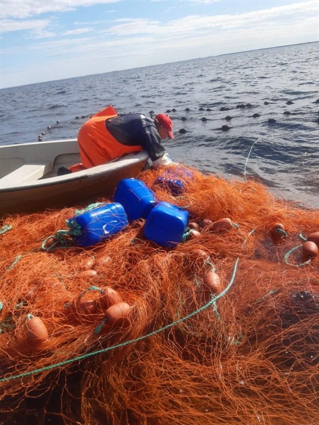 Från bara en av de två ryssjorna som slitit sig var det uppskattningsvis 3,5 kilometer ankarlinor som låg löst i vattnet.