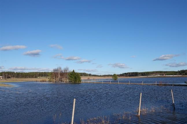 Smältvattnet ledde till översvämmade åkrar under våren, vilket gjorde att många jordbrukare fick ändra årets odlingsplaner. Bilden är från Österbotten.