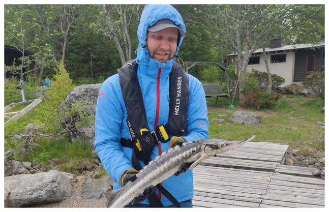 Jussi Seppä fångade en stör i nätet på Bergö i helgen.
