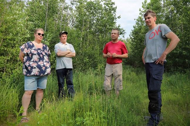 Johanna Nyman, Torbjörn Häggvik, Bjarne Mara och Tomas Långgård tar gemensamma tag inom ÖSP för att bevaka markägarnas intressen när nya kraftledningar planeras.