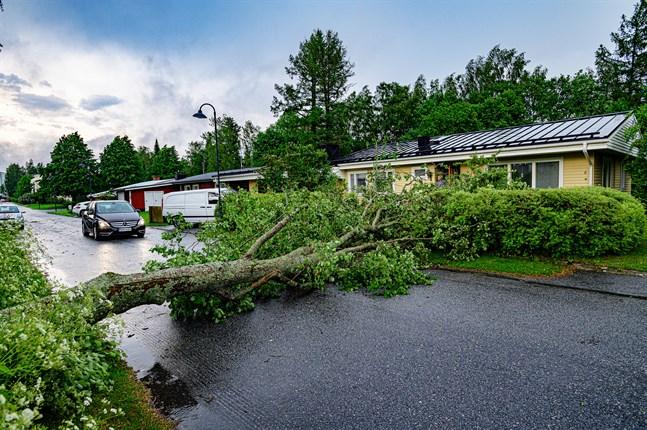 Frej Björklund hade nyss backat undan bilen för att undgå de hotfullt lutande träden när stormen välte ett av dem farligt nära mot hans gård.