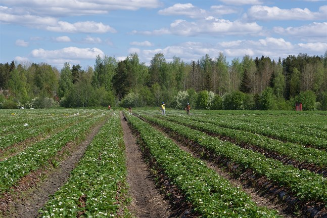 EU har kommit överens om riktlinjerna för den gemensamma jordbrukspolitiken fram till utgången 2027.