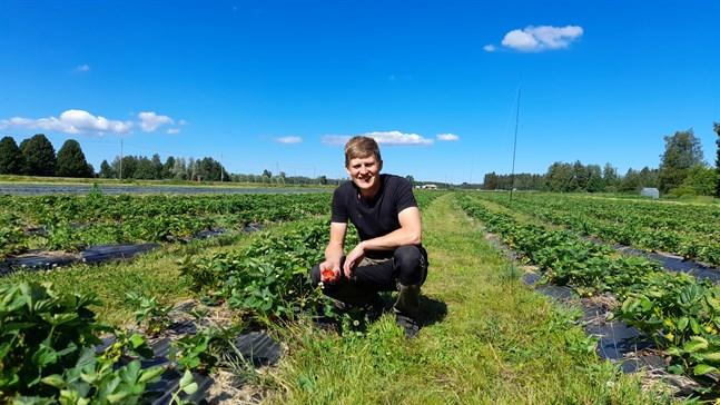 Markus Smeds på Jeriko gård är inte orolig på årets skörd.