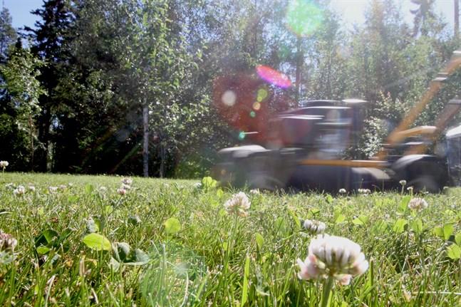 Till och med något så simpelt som en gräsmatta kan landa i domstolen. Gräsmattan på bilden har inget med fallet att göra.