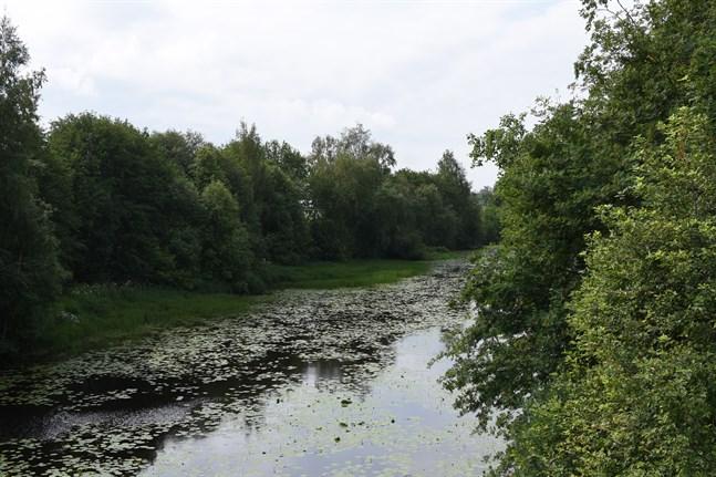 Enligt planerna ska stigen längs Närpes å användas för rekreation både sommar- och vintertid. Bilden är från Forsbron.