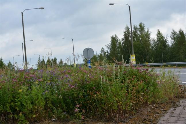 De vildvuxna planteringarna skymmer sikten för bilförare påpekar Kristinasällskapet. Så här såg det ut vid södra rampen där bilförare svänger söderut mot Björneborg. Bilden tagen på onsdagsmorgonen.