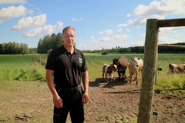 Tomas Nyström började jobba med Träskkulla Ekobeef på heltid för drygt två år sedan.