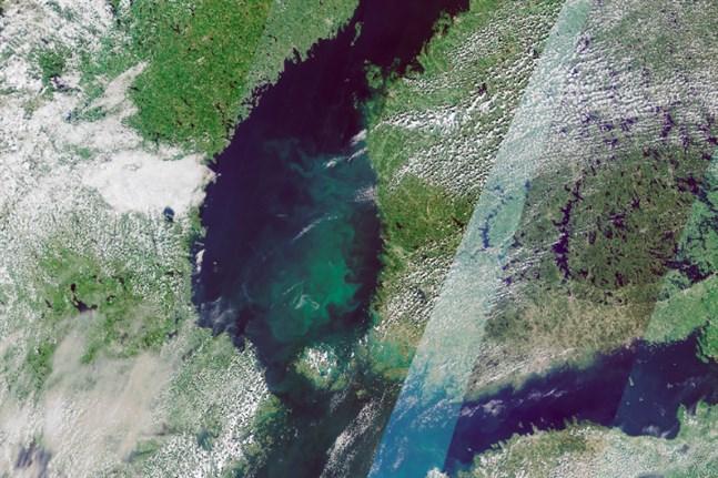 Blågröna alger förekommer i rikliga mängder i Bottenhavet. Satellitbilden är från 13 juli.