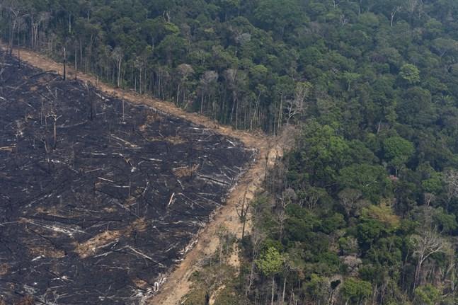 Ett nedbränt område bredvid orörd regnskog i brasilianska Amazonas. Arkivbild.