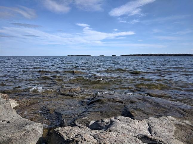 För tillfället förekommer vibriobakterier i hög grad i så gott som hela Östersjön.