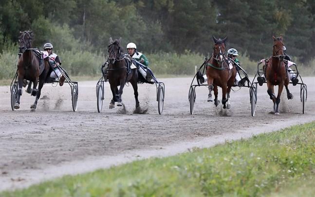 Mikael Östman från Nykarleby (tredje från vänster) tävlade i detta lopp med det sexåriga varmblodet Västerbo Baffy. Totalt tävlade 52 ekipage från hela Österbotten under tisdagens tävlingar.