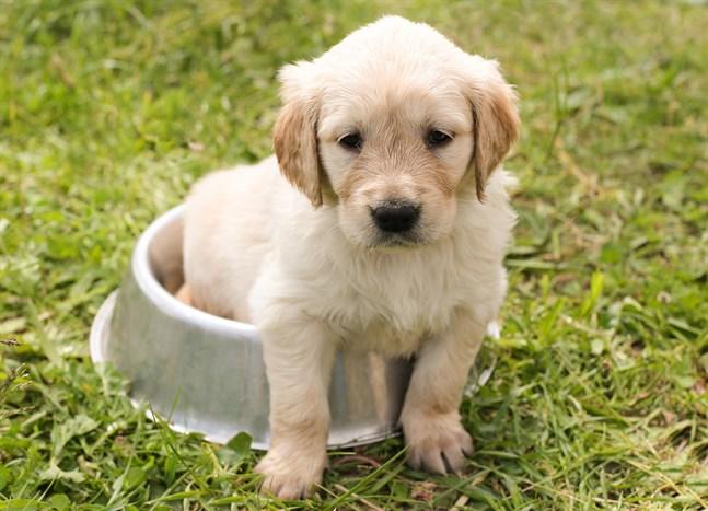 Kom ihåg att inte låta hunden bada i, eller dricka, vatten som innehåller cyanobakterier.