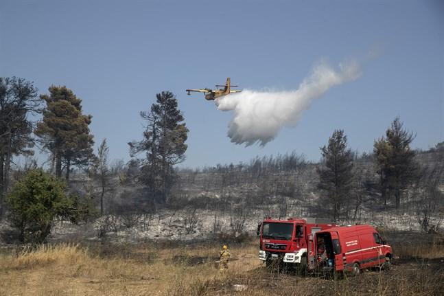 Ett plan släpper vatten över en skogsbrand i området Dionysos, en förort till Aten.