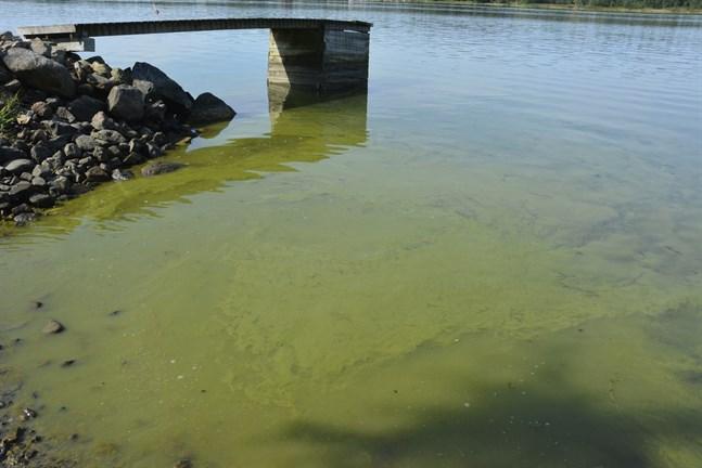 Om vattnet ser ut så här är det med stor sannolikhet blågröna alger som blommar. Bilden är tagen i sundet mellan Kaskö och Eskilsö.