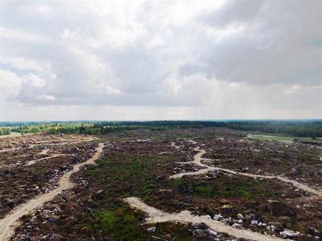 På den här 50 hektar stora tomten planeras en katodfabrik. Vy mot sydost från Stenskogsvägen vid norra tomtkanten. Avståndet från vägen till den blå baracken mitt på bild är ungefär 500 meter.