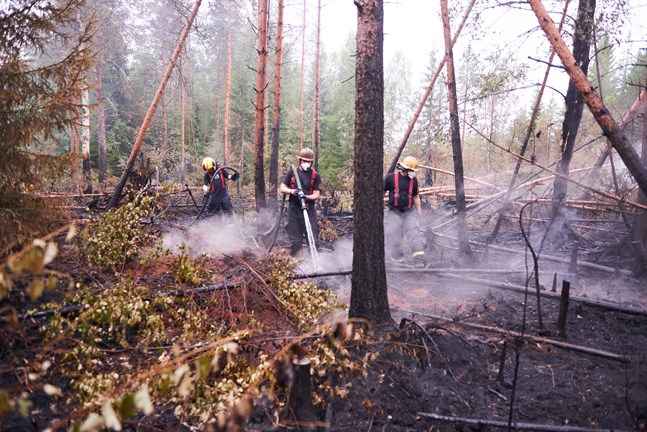 Röken stiger upp från marken lite överallt, och på varje sådan plats kan lågorna flamma upp igen. Alexander Henriksson, Kristoffer Bergvik och Peter Bäck ser till att skogsbranden inte får fart igen.