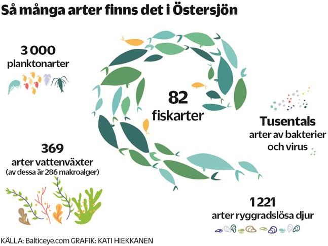 Under ytan i Östersjön finns en mångfald av växter och djur, som tillsammans utgör byggstenarna i havets marina ekosystem.