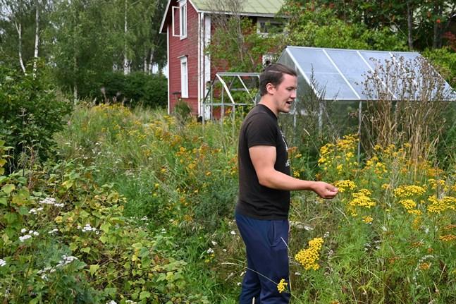 Hemma hos sin mamma i Näsby har Torgny Backman förvandlat gräsmattan till en äng. Ännu i augusti finns en hel del blomsterprakt kvar.