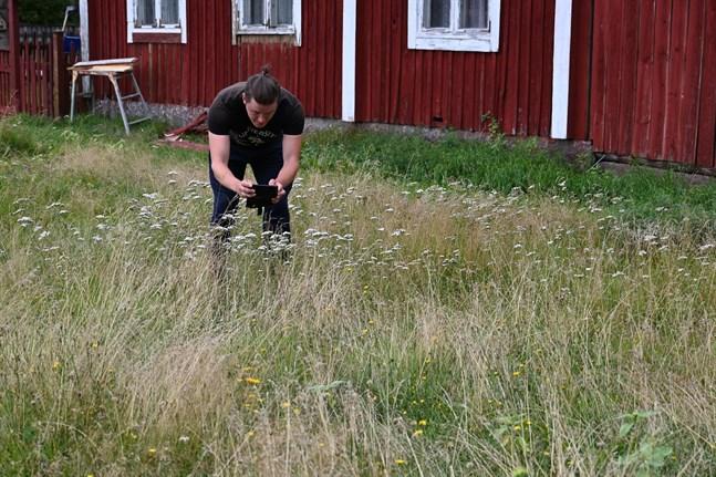 Biolog Torgny Backman studerar pollinatörer på Fiskartorgets äng i Kaskö.