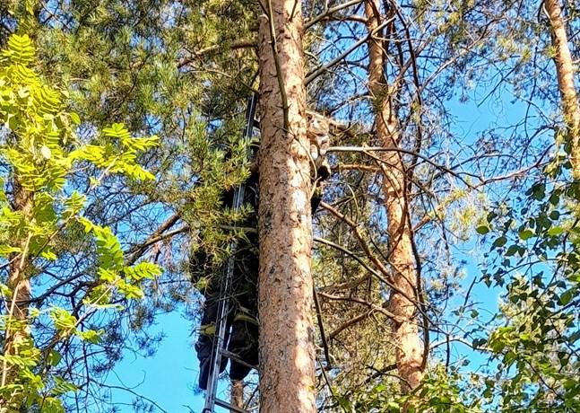 Jamande Yxpilakatt räddas från fem meter högt träd i Yxpila.