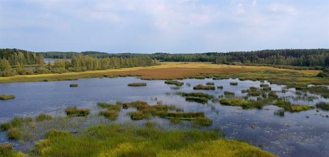 Föreningen Rekijärvis förskönande fortsätter det idoga arbetet med att förbättra vattendragets tillstånd.