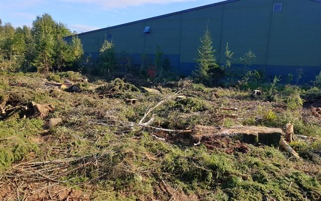 Otaliga träd har röjts undan för att ge plats åt padelhallen.