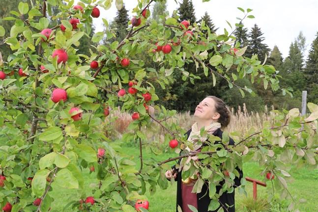 Christine Smeds spanar in den färska frukten vid Lalle gård.