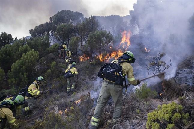 Brandmän bekämpar den stora branden i provinsen Málaga i Spanien. Bilden togs i lördags.