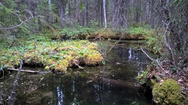 Källorna är platser där grundvatten rinner fram ur marken och skapar värdefulla livsmiljöer som skiljer sig från den övriga miljön. Källan på bilden finns i Kauhajoki i Södra Österbotten.