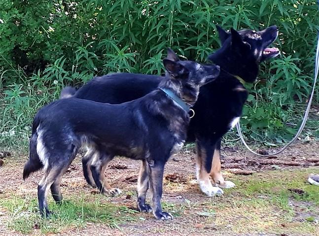 Under hösten kan det vara svårt att få syn på en hund i skymningen eller mörkret om den inte bär reflex eller lampa. Hundar med svart eller mörk päls är minst synliga, enligt Djurförsäkringsbolaget Agria.