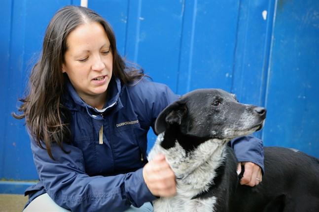 Niina Männistö äger hundgården Kulkuri. Nioåriga René är en av de hundar hon försöker hitta ett nytt hem åt.