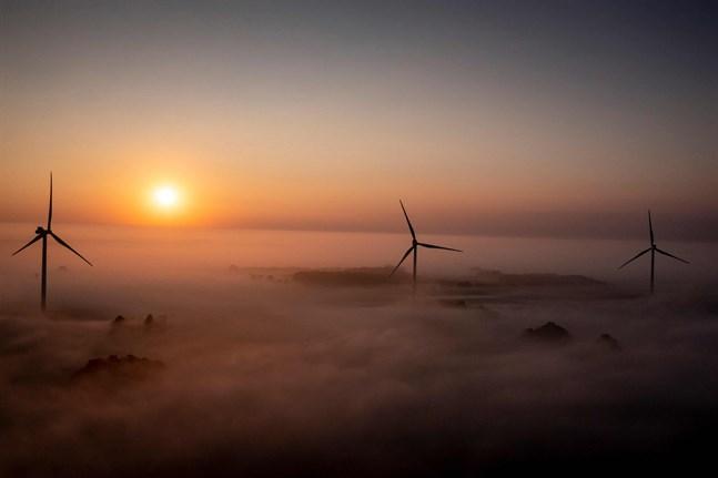 Danmark har världens högsta andel vindenergi. Bilden är från Tureby på Själland.