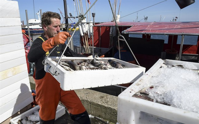 Fisk lossas från en fiskebåt.