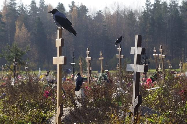 En kyrkogård i S:t Petersburg där en sektion avdelats för coviddöda.